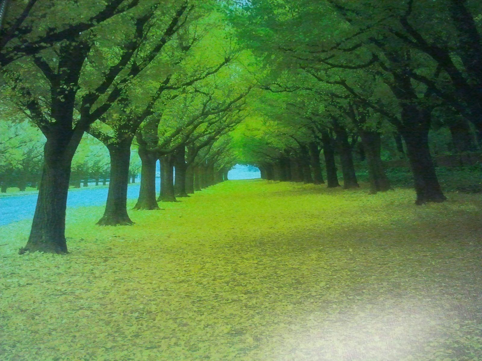 rừng xanh
