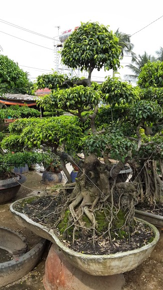 503 - Sanh dáng bay