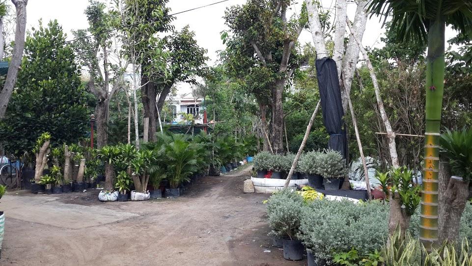 Vườn ươm Cây Cảnh Nhà Xanh