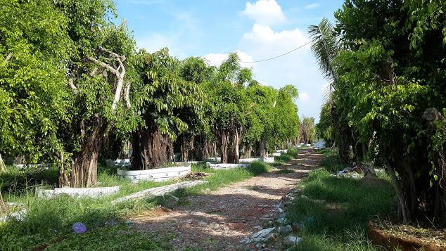 400 C - Vườn ươm cây xanh bóng mát
