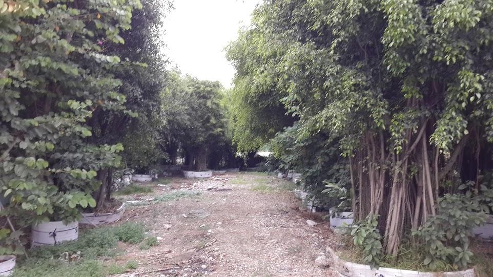 400 - Vườnn cây cổ thụ